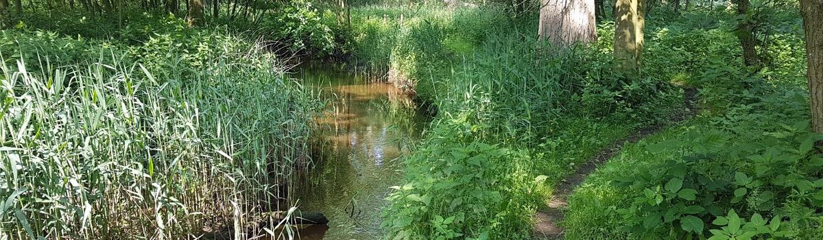 Het unieke Brabants water
